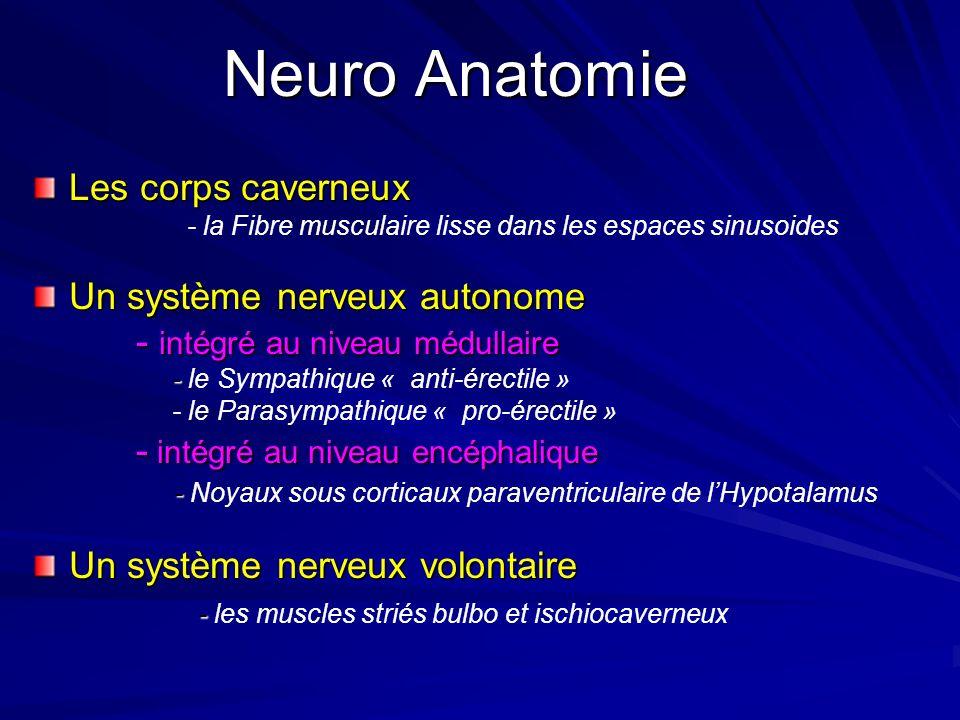 Neuro Anatomie Les corps caverneux - la Fibre musculaire lisse dans les espaces sinusoides Un système nerveux autonome - intégré au niveau médullaire - intégré au niveau médullaire - - le Sympathique « anti-érectile » - le Parasympathique « pro-érectile » - intégré au niveau encéphalique - intégré au niveau encéphalique - - Noyaux sous corticaux paraventriculaire de lHypotalamus Un système nerveux volontaire - - les muscles striés bulbo et ischiocaverneux