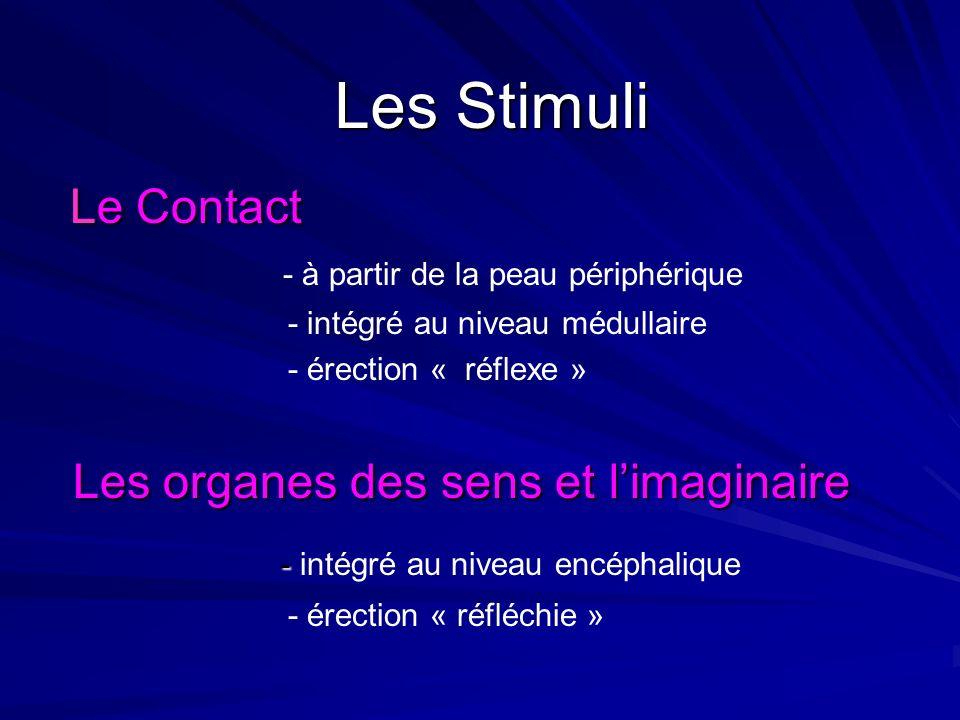 Encéphalique Organes des sens Imaginaire « érection réfléchie » Périphérique Le Contact «érection réflexe »