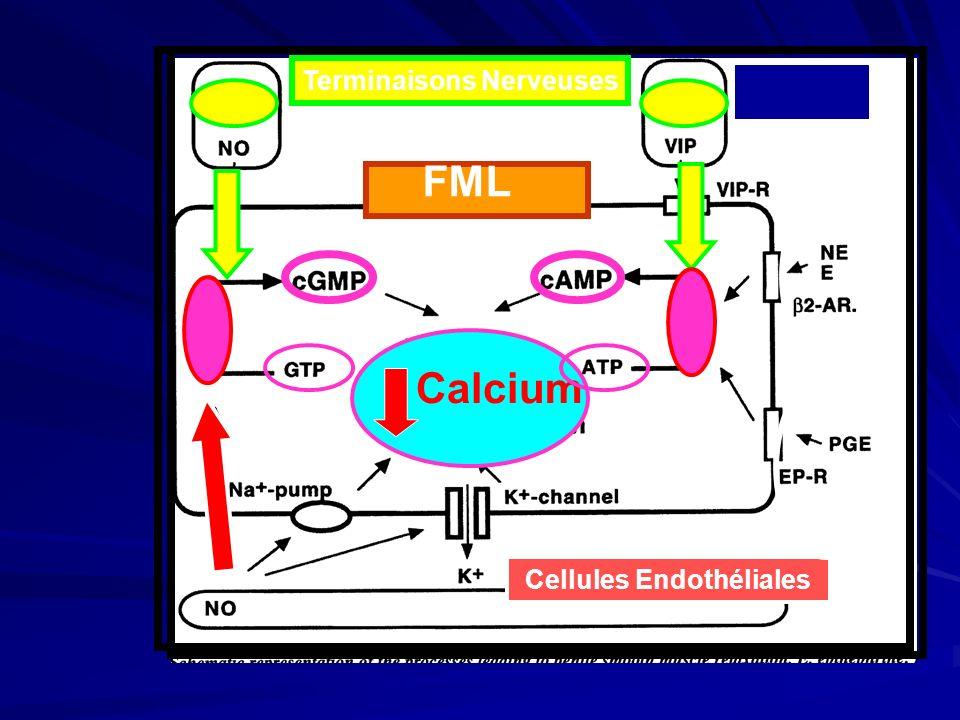Un phénomène vasculo-tissulaire sous laction de neuro-médiateurs.