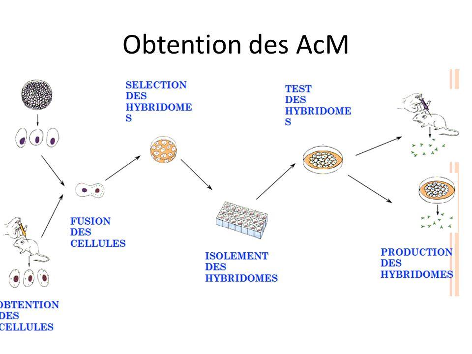 Obtention des AcM