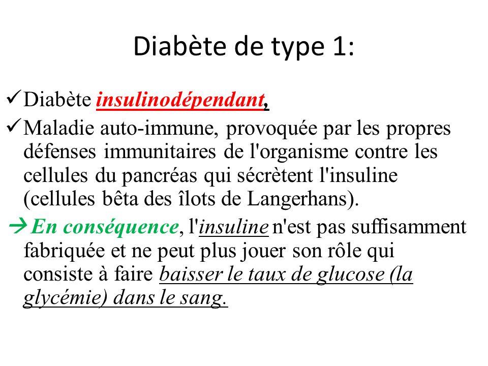Diabète de type 1: Diabète insulinodépendant, Maladie auto-immune, provoquée par les propres défenses immunitaires de l organisme contre les cellules du pancréas qui sécrètent l insuline (cellules bêta des îlots de Langerhans).