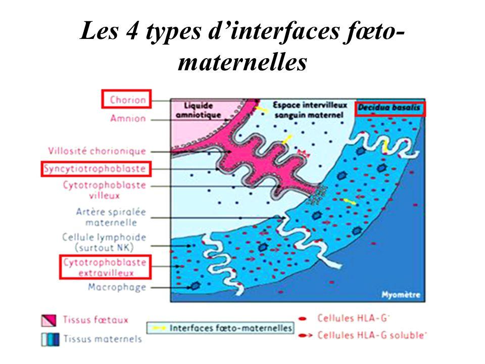 Les 4 types dinterfaces fœto- maternelles
