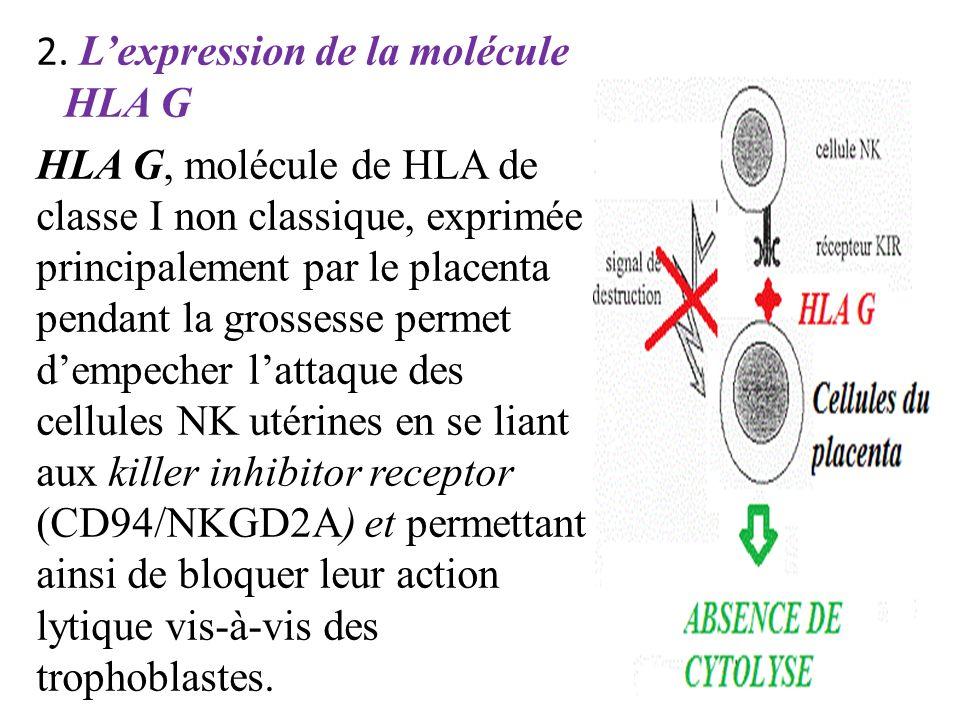 2. Lexpression de la molécule HLA G HLA G, molécule de HLA de classe I non classique, exprimée principalement par le placenta pendant la grossesse per