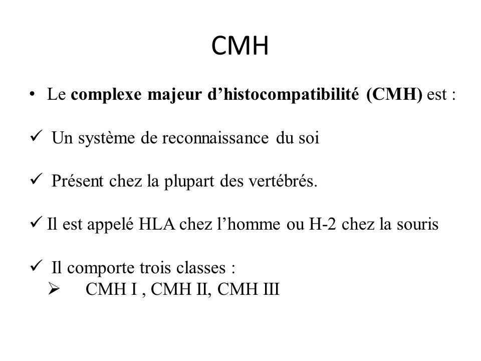 CMH Le complexe majeur dhistocompatibilité (CMH) est : Un système de reconnaissance du soi Présent chez la plupart des vertébrés. Il est appelé HLA ch