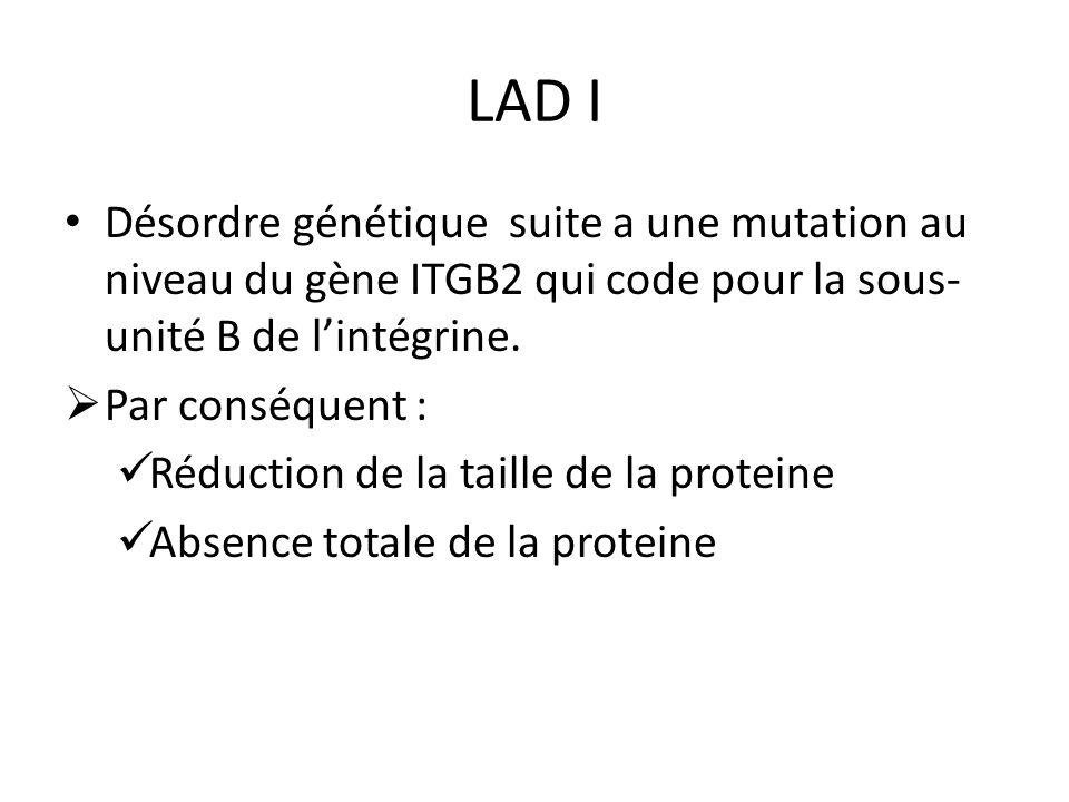LAD I Désordre génétique suite a une mutation au niveau du gène ITGB2 qui code pour la sous- unité B de lintégrine. Par conséquent : Réduction de la t