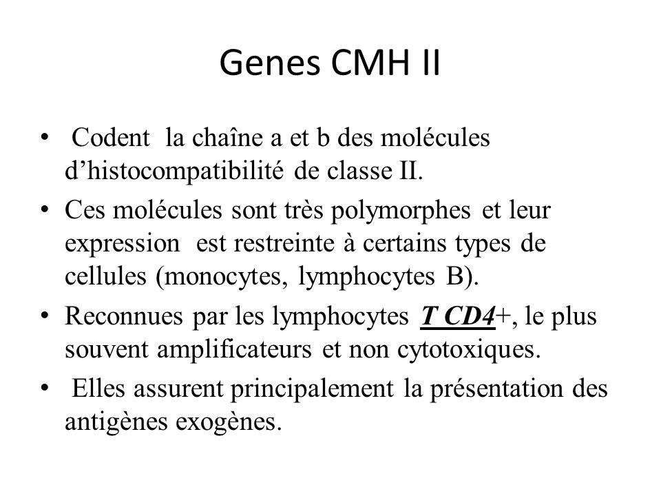 Genes CMH II Codent la chaîne a et b des molécules dhistocompatibilité de classe II. Ces molécules sont très polymorphes et leur expression est restre