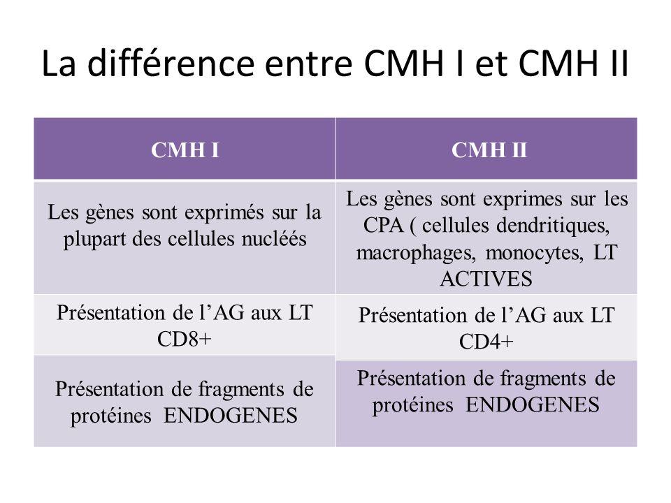 La différence entre CMH I et CMH II CMH I CMH II Les gènes sont exprimés sur la plupart des cellules nucléés Les gènes sont exprimes sur les CPA ( cellules dendritiques, macrophages, monocytes, LT ACTIVES Présentation de lAG aux LT CD8+ Présentation de lAG aux LT CD4+ Présentation de fragments de protéines ENDOGENES