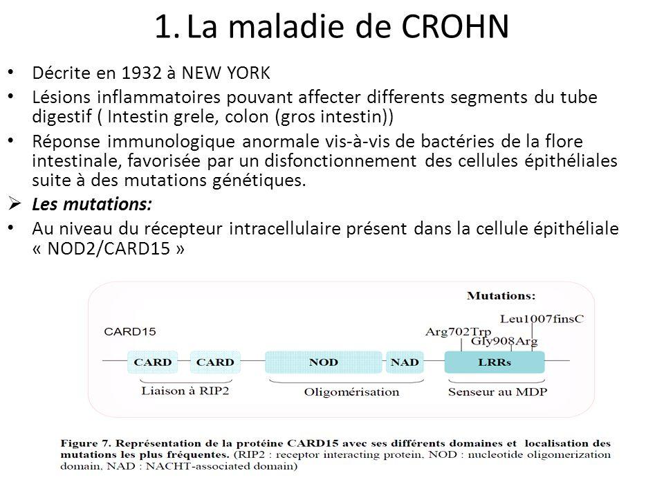 Limmunité intestinale au cours des MICI Cellules épithéliales intestinales TLR NOD2/CARD15 Détection des AG CD TH1 TH17 Migration dans les ganglions lymphatiques AG TH2