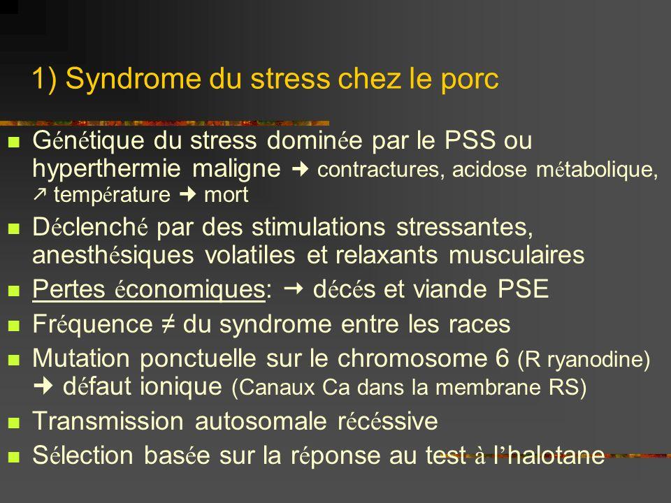 1) Syndrome du stress chez le porc G é n é tique du stress domin é e par le PSS ou hyperthermie maligne contractures, acidose m é tabolique, temp é rature mort D é clench é par des stimulations stressantes, anesth é siques volatiles et relaxants musculaires Pertes é conomiques: d é c é s et viande PSE Fr é quence du syndrome entre les races Mutation ponctuelle sur le chromosome 6 (R ryanodine) d é faut ionique (Canaux Ca dans la membrane RS) Transmission autosomale r é c é ssive S é lection bas é e sur la r é ponse au test à l halotane