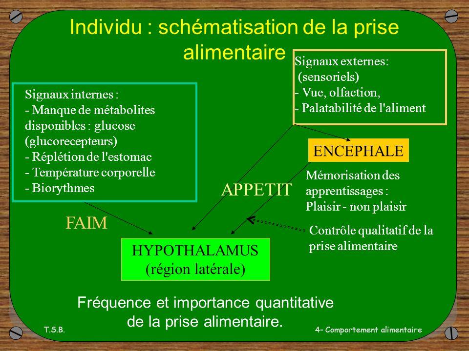 T.S.B.4- Comportement alimentaire Individu : schématisation de la prise alimentaire HYPOTHALAMUS (région latérale) Signaux internes : - Manque de métabolites disponibles : glucose (glucorecepteurs) - Réplétion de l estomac - Température corporelle - Biorythmes Signaux externes: (sensoriels) - Vue, olfaction, - Palatabilité de l aliment Mémorisation des apprentissages : Plaisir - non plaisir Contrôle qualitatif de la prise alimentaire Fréquence et importance quantitative de la prise alimentaire.