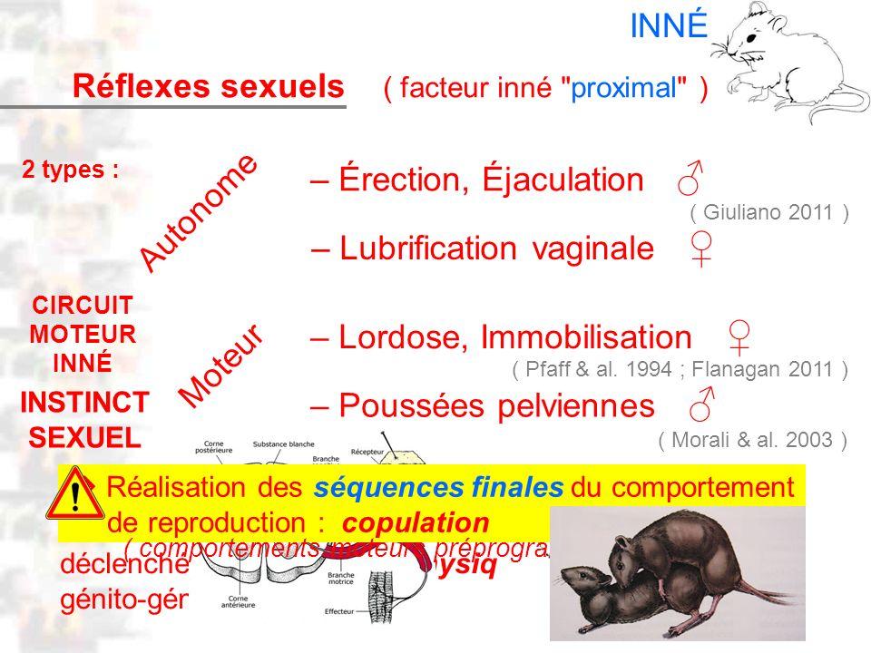 déclenchée par : contact physique génito-génital des corps D19 : Modèle : Mammifères 11 : Réflexes 1 Réflexes sexuels ( facteur inné