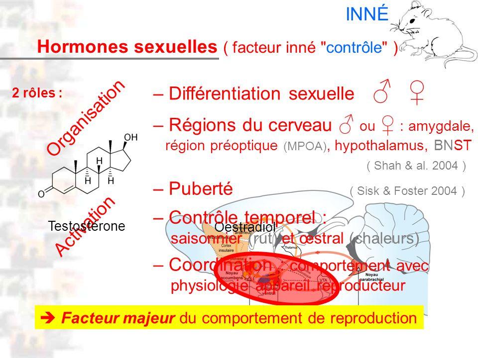 Oestradiol D14 : Modèles : Mammifères 6 : Hormones 1 – Différentiation sexuelle – Régions du cerveau ou : amygdale, région préoptique (MPOA), hypothal
