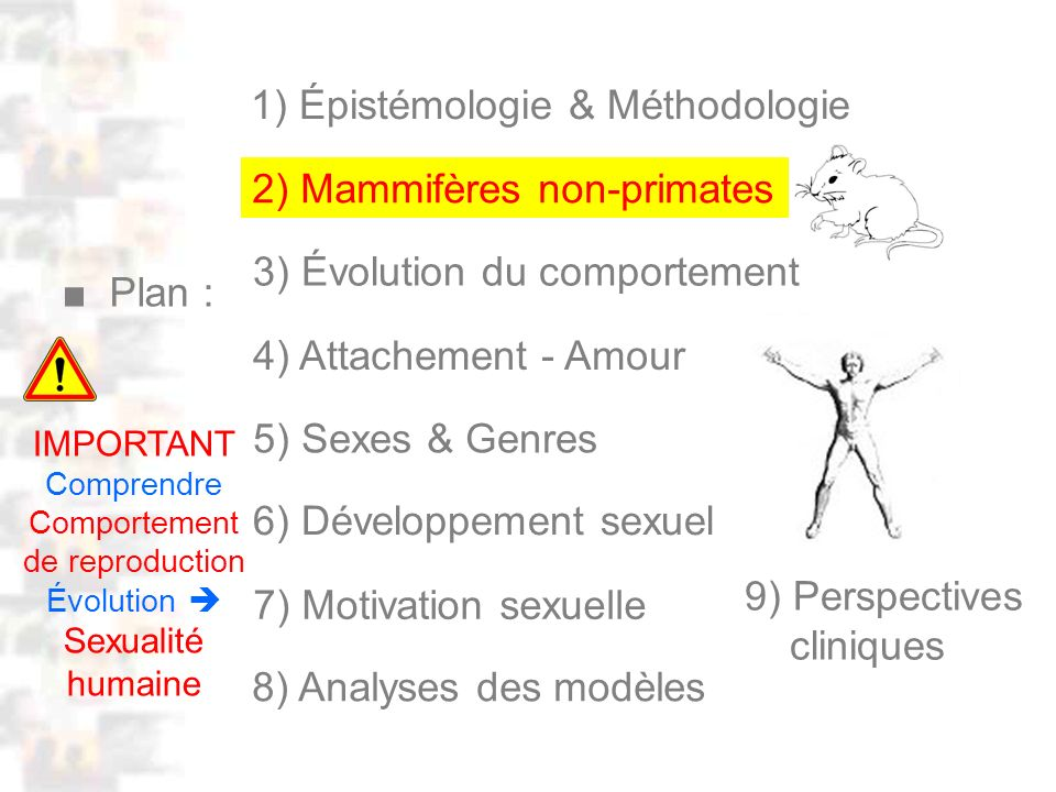 D29 : Modèles : Mammifères 21 : Attachement 1 Attachement : Le même système cérébral produit différentes formes d attachement : sexuelles, maternelles, affectives … – Plus existe ces récepteurs dans Récompense plus les attachements sont importants Campagnols : Prairies / Montagnes – Attachement sexuel : +++ + maternel : +++ + – Récepteurs Récompense ( Young & al.