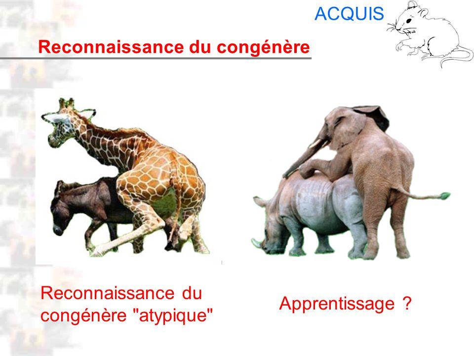 D24 : Modèles : Mammifères 16 : Facteurs acquis 3 Reconnaissance du congénère ACQUIS Reconnaissance du congénère