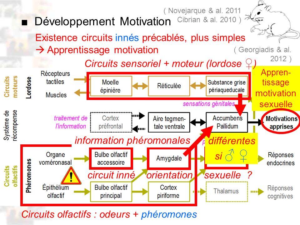 Appren- tissage motivation sexuelle D26 : Modèles : Mammifères 18 : Facteurs acquis 5 Existence circuits innés précablés, plus simples Apprentissage m