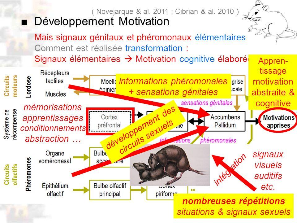 D26 : Modèles : Mammifères 18 : Facteurs acquis 5 Mais signaux génitaux et phéromonaux élémentaires Comment est réalisée transformation : Signaux élém