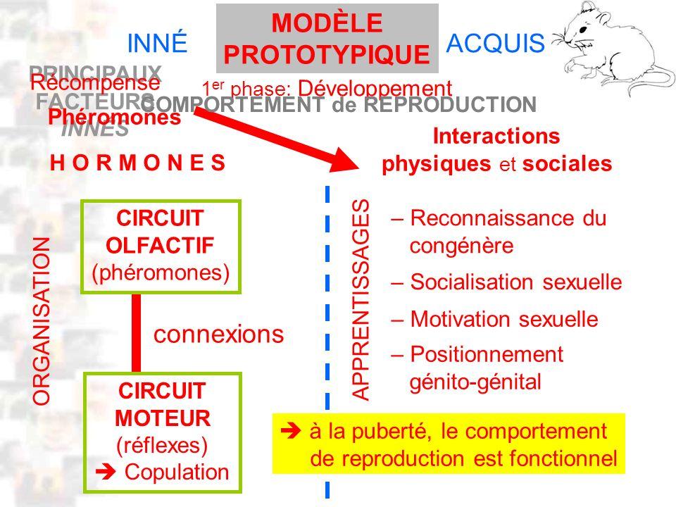 PRINCIPAUX FACTEURS INNÉS D32 : Modèles : Mammifères 22 : Synopsis 1 INNÉACQUIS H O R M O N E S CIRCUIT OLFACTIF (phéromones) CIRCUIT MOTEUR (réflexes