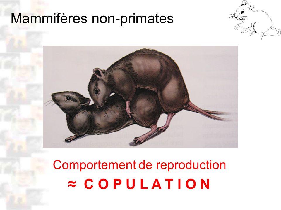 D31 : Modèles : Mammifères 21 : Attachement 2 Attachement : Stimulations du corps, sexuelles, maternelles, affectives … principal facteur des attachements chez les mammifères ( Keverne 1996, Kendrick 1994 ) – Les stimulations somatosensorielles, surtout intenses induisent de l attachement – L accouchement, surtout distension vagin et du col uterus, puis stimulations mamelons, induisent l attachement maternel – La copulation induit l attachement sexuel – Les stimulations corporelles agréables (caresses …) induisent l attachement affectif – Même entre espèces, stimulations corps induisent attachements réciproques.