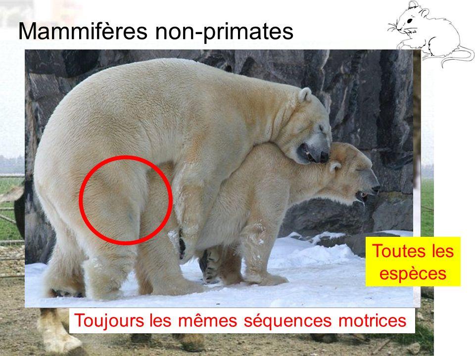 Mammifères non-primates D9 : Modèles : Mammifères 2 : Comportement 2 Toujours les mêmes séquences motrices Toutes les espèces