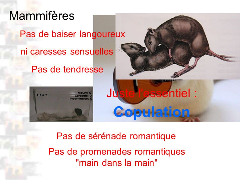 D27 : Modèles : Mammifères 19 : Facteurs acquis 6 Positionnement génito-génital Privation contact physique ( rats ) – incapable de positionner le corps Existence de jeux physiques et sexuels Apprentissage au cours des premiers jeux physiques et sexuels – Apprentissage d un schéma corporel – Apprentissage de la séquence de la monte ( Ward 1992 ) Positionnement génito-génital pas inné ACQUIS : inné .