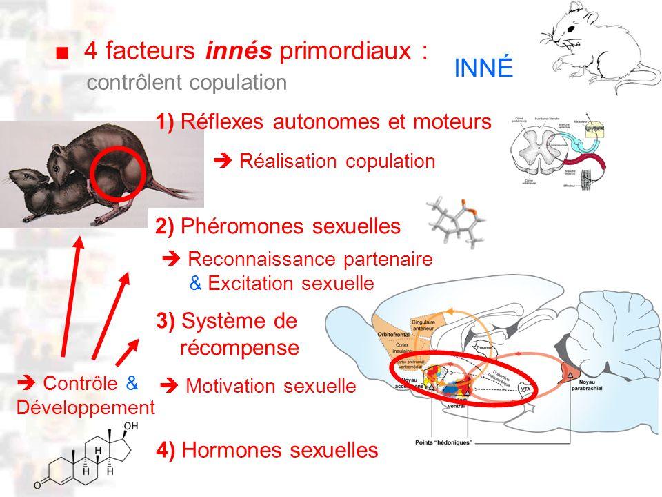 D8 : Modèles : Mammifères 1 : Comportement 1 Neurobiologie : CIRCUITS SENSORI MOTEUR INNÉS CIRCUIT OLFACTIF INNÉ Réflexes (Lordose) Copulation Phéromones Excitation sexuelle & Reconnaissance partenaire CIRCUIT RÉCOM- PENSE Apprentissage motivation Hormones sexuelles Développement des circuits Contrôle activité inhibitions Circuits sexuels spécialisés, constitués par :