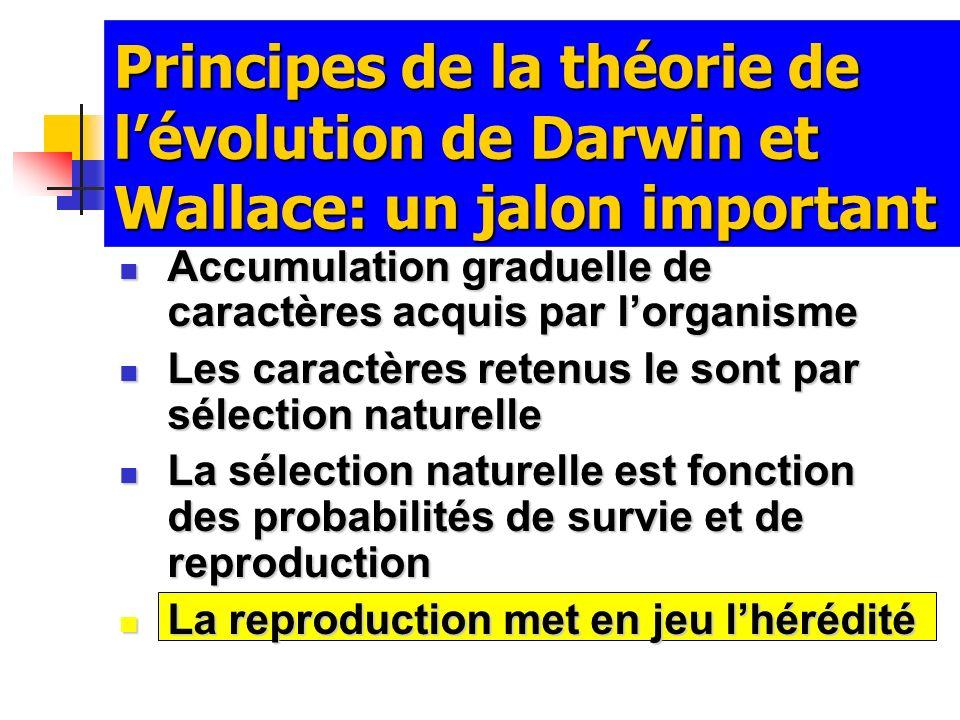 Principes de la théorie de lévolution de Darwin et Wallace: un jalon important Accumulation graduelle de caractères acquis par lorganisme Accumulation