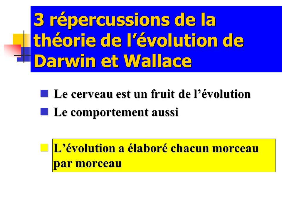 3 répercussions de la théorie de lévolution de Darwin et Wallace Le cerveau est un fruit de lévolution Le cerveau est un fruit de lévolution Le compor