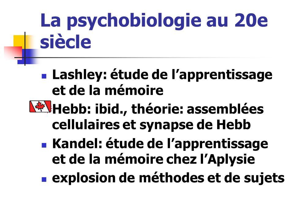 La psychobiologie au 20e siècle Lashley: étude de lapprentissage et de la mémoire Hebb: ibid., théorie: assemblées cellulaires et synapse de Hebb Kand