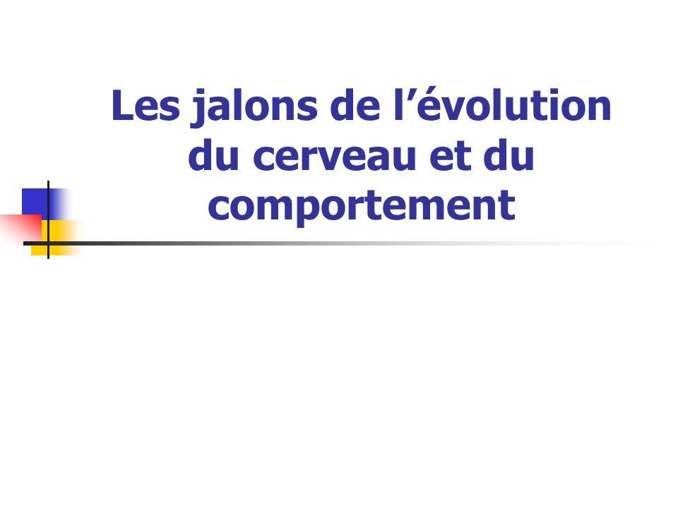 Les jalons de lévolution du cerveau et du comportement