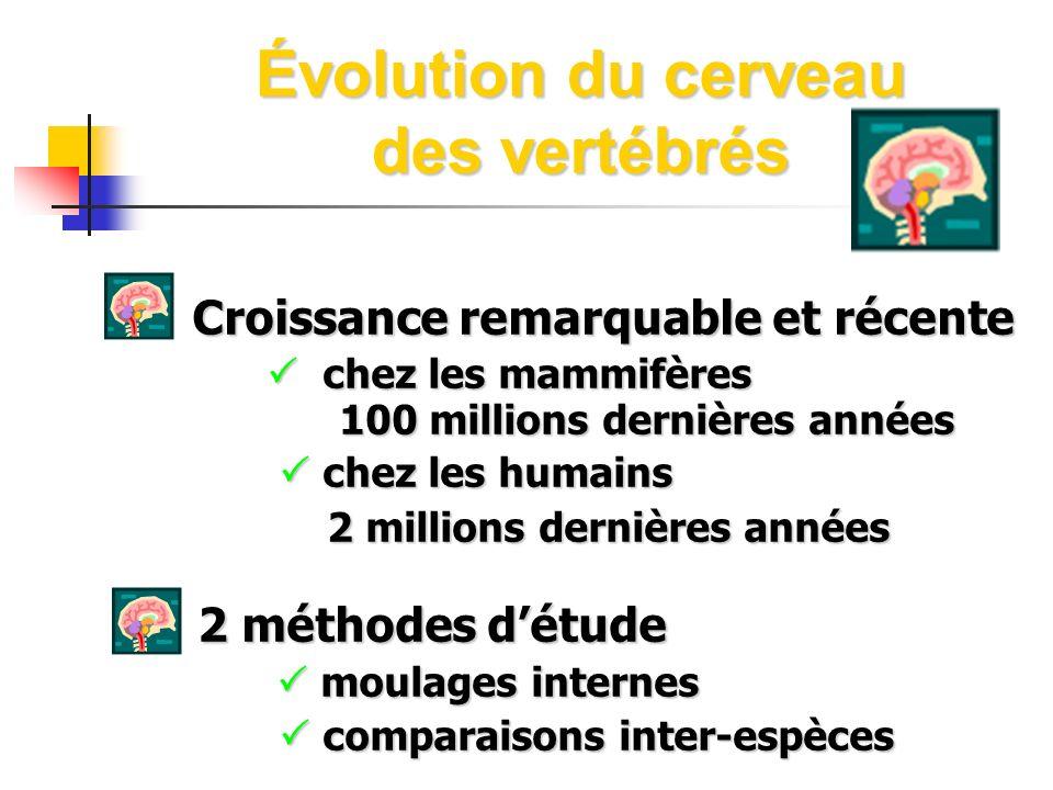 Évolution du cerveau des vertébrés Croissance remarquable et récente Croissance remarquable et récente chez les mammifères 100 millions dernières anné