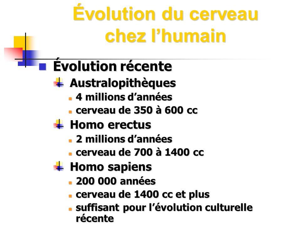 Évolution du cerveau chez lhumain Évolution récente Évolution récente Australopithèques Australopithèques 4 millions dannées 4 millions dannées cervea