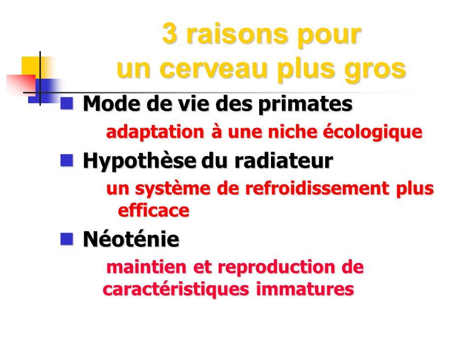 3 raisons pour un cerveau plus gros Mode de vie des primates Mode de vie des primates adaptation à une niche écologique Hypothèse du radiateur Hypothè