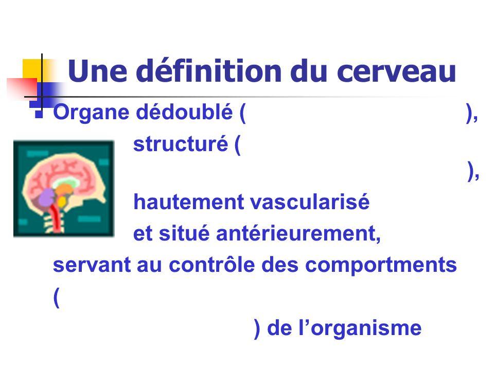 Une définition du cerveau Organe dédoublé ( ), structuré ( ), hautement vascularisé et situé antérieurement, servant au contrôle des comportments ( )