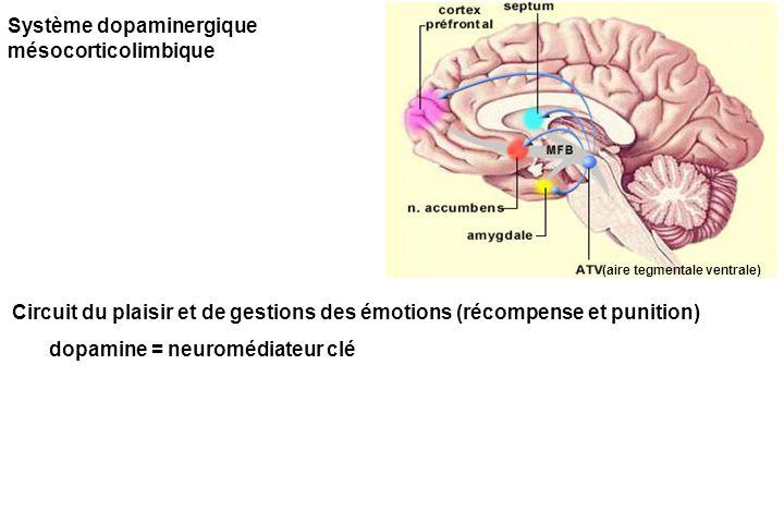 Système dopaminergique mésocorticolimbique Circuit du plaisir et de gestions des émotions (récompense et punition) dopamine = neuromédiateur clé (aire tegmentale ventrale)