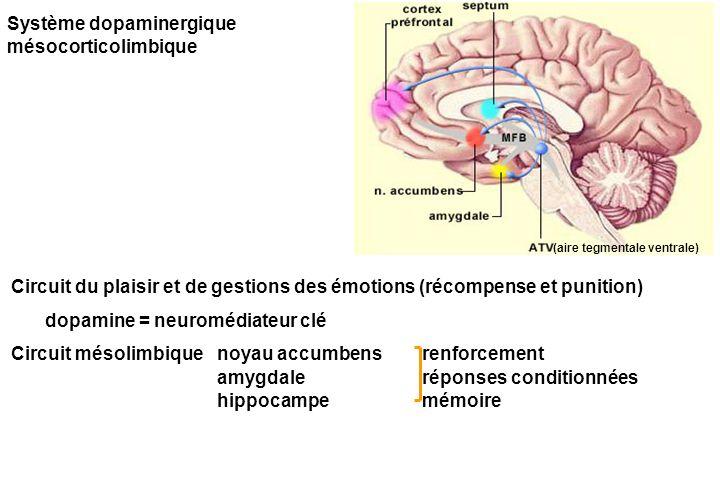 Système dopaminergique mésocorticolimbique Circuit du plaisir et de gestions des émotions (récompense et punition) dopamine = neuromédiateur clé Circuit mésolimbique noyau accumbensrenforcement amygdaleréponses conditionnées hippocampemémoire (aire tegmentale ventrale)