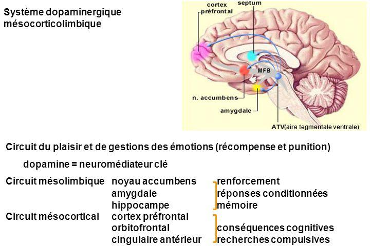 Système dopaminergique mésocorticolimbique Circuit du plaisir et de gestions des émotions (récompense et punition) dopamine = neuromédiateur clé Circuit mésolimbique noyau accumbensrenforcement amygdaleréponses conditionnées hippocampemémoire Circuit mésocorticalcortex préfrontal orbitofrontalconséquences cognitives cingulaire antérieurrecherches compulsives (aire tegmentale ventrale)