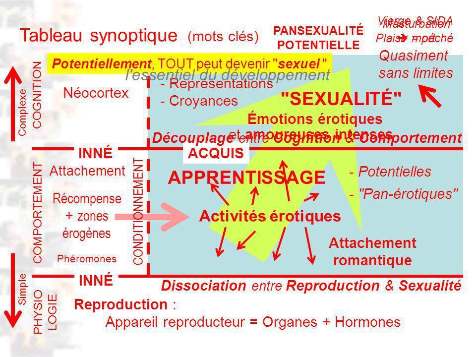 APPRENTISSAGE D101 : Modèles : Homme 20 : Développement & Dynamique 23 Tableau synoptique (mots clés) Complexe Simple PHYSIO LOGIE COMPORTEMENT COGNITION INNÉACQUIS Reproduction : Appareil reproducteur = Organes + Hormones Dissociation entre Reproduction & Sexualité Récompense + zones érogènes Activités érotiques - Pan-érotiques Néocortex Phéromones - Conceptualisations - Représentations - Croyances SEXUALITÉ Découplage entre Cognition & Comportement Quasiment sans limites CONDITIONNEMENT - Potentielles PANSEXUALITÉ POTENTIELLE Potentiellement, TOUT peut devenir sexuel Émotions érotiques Vierge & SIDA Plaisir = péché Masturbation mort l essentiel du développement et amoureuses intenses INNÉ Attachement romantique