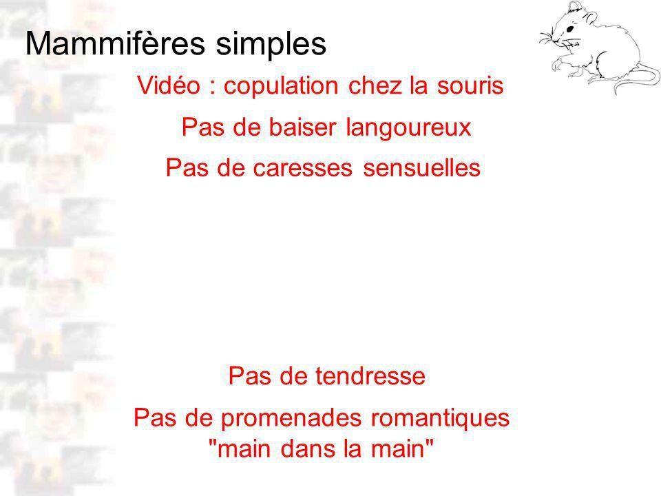 Mammifères simples Vidéo : copulation chez la souris D11 : Modèles : Mammifères 4 : Comportement 4 Pas de baiser langoureux Pas de caresses sensuelles Pas de tendresse Pas de promenades romantiques main dans la main