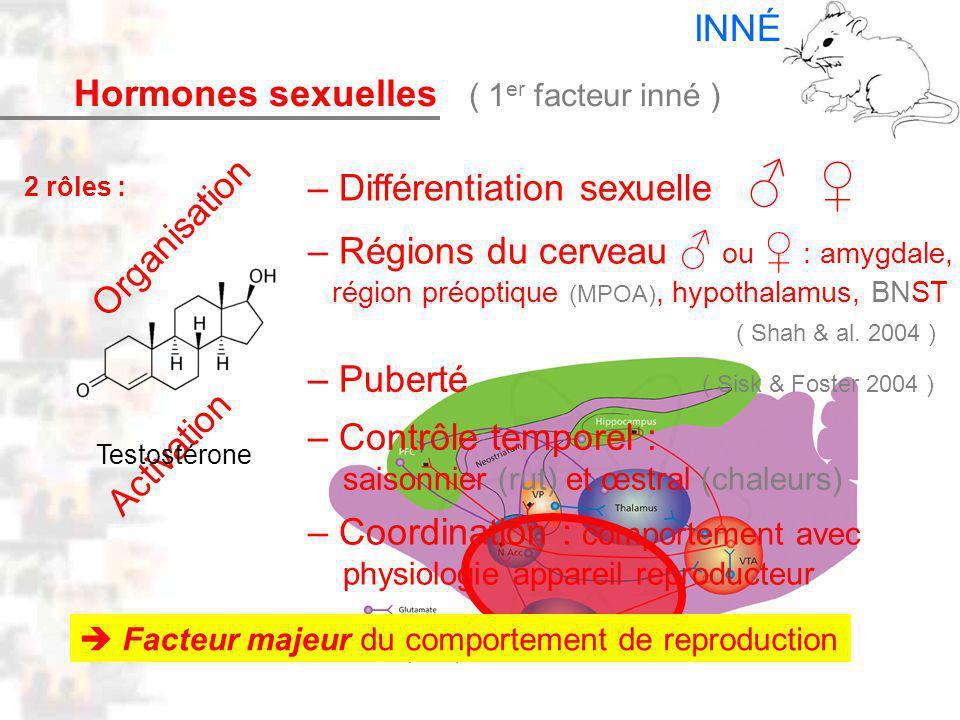 Oestradiol D14 : Modèles : Mammifères 6 : Hormones 1 – Différentiation sexuelle – Régions du cerveau ou : amygdale, région préoptique (MPOA), hypothalamus, BNST – Puberté – Contrôle temporel : saisonnier (rut) et œstral (chaleurs) Organisation Activation Hormones sexuelles ( 1 er facteur inné ) ( Sisk & Foster 2004 ) ( Shah & al.