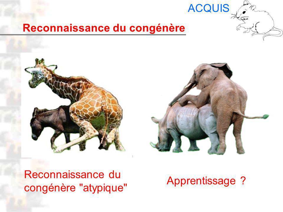 D24 : Modèles : Mammifères 16 : Facteurs acquis 3 Reconnaissance du congénère ACQUIS Reconnaissance du congénère atypique Apprentissage ?