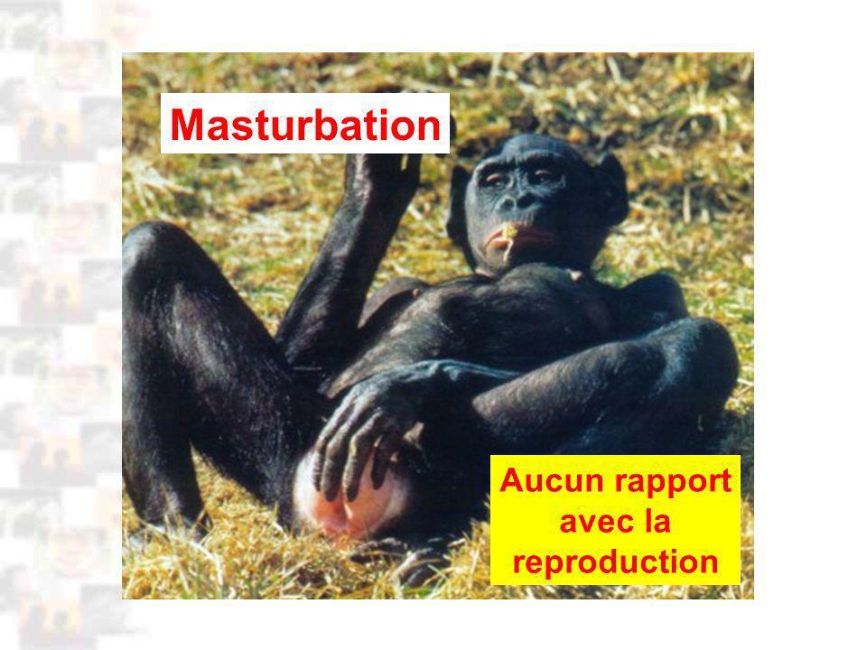 D37 : Modèles : Homme 3 : Évolution 2 : Photo 1 Masturbation Aucun rapport avec la reproduction