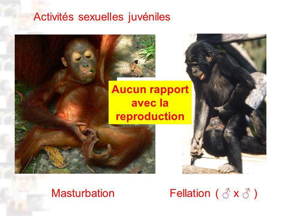 D39 : Modèles : Homme 3 : Évolution 2 : Photo 1 Masturbation Activités sexuelles juvéniles Appareil reproducteur IMMATURE Aucun rapport avec la reproduction Fellation ( x )