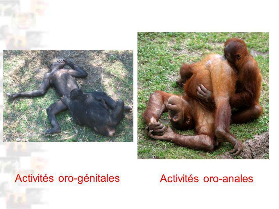 D40 : Modèles : Homme 3 : Évolution 2 : Photo 1 Activités oro-génitales Activités oro-anales