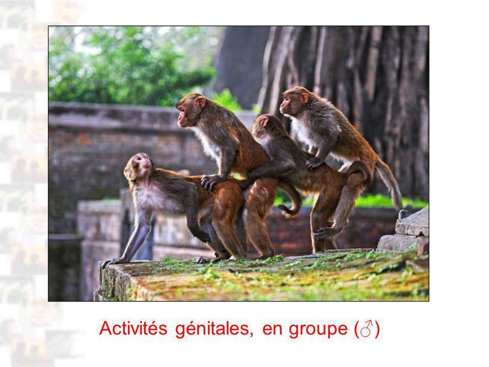 D42 : Modèles : Homme 3 : Évolution 2 : Photo 1 Activités génitales, en groupe ()