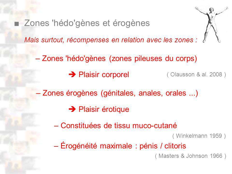 D52 : Modèles : Homme 10 : Renforcement 2 – Constituées de tissu muco-cutané – Zones hédo gènes (zones pileuses du corps) ( Olausson & al.