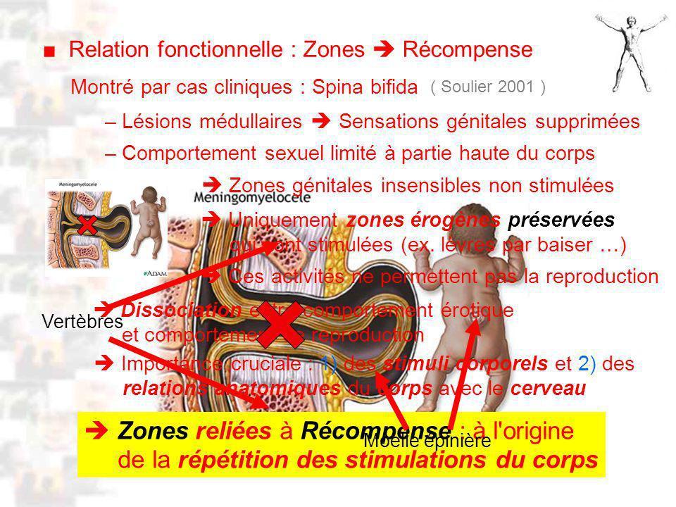 D53 : Modèles : Homme 11 : Renforcement 3 Montré par cas cliniques : Spina bifida ( Soulier 2001 ) – Lésions médullaires Sensations génitales supprimées – Comportement sexuel limité à partie haute du corps Uniquement zones érogènes préservées qui sont stimulées (ex.