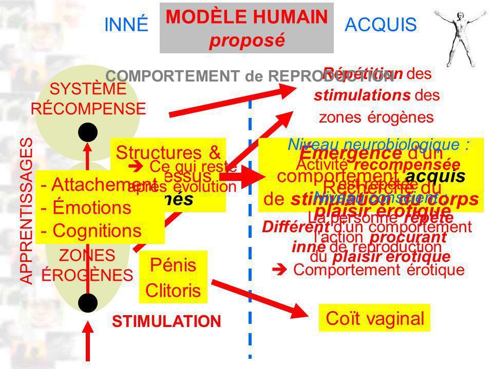 D54 : Modèles : Homme 12 : Modèle INNÉACQUIS STIMULATION ACTIVATION Répétition des stimulations des zones érogènes SYSTÈME RÉCOMPENSE ZONES ÉROGÈNES Émergence d un comportement acquis de stimulation du corps Pénis Clitoris Coït vaginal Comportement érotique MODÈLE HUMAIN proposé Différent d un comportement inné de reproduction Structures & processus innés COMPORTEMENT de REPRODUCTION Niveau neurobiologique : Activité recompensée est répétée Niveau conscient : La personne répète l action procurant du plaisir érotique Recherche du plaisir érotique - Attachement - Émotions - Cognitions Ce qui reste après évolution APPRENTISSAGES