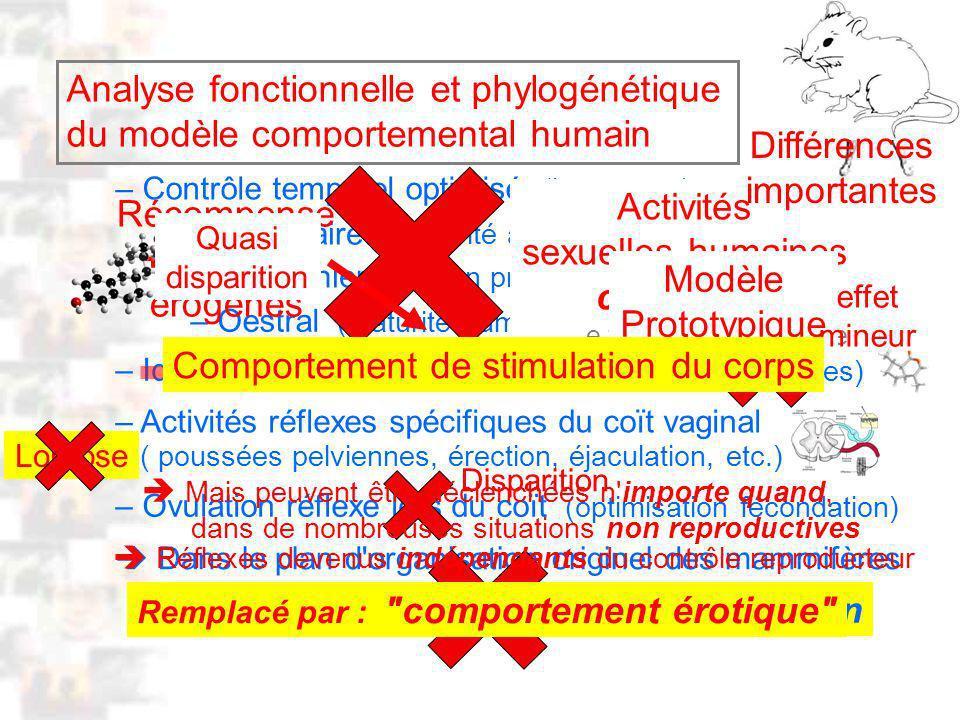 D55 : Modèles : Homme 14 : Analyse 1 – Contrôle temporel optimisé (hormones) : Dans le plan d organisation originel des mammifères – Saisonnier (saison propice) – Oestral (maturité gamètes) – Pubertaire (maturité appareil reproducteur) ( poussées pelviennes, érection, éjaculation, etc.) – Identification partenaire sexe opposé (phéromones) – Activités réflexes spécifiques du coït vaginal Véritable comportement de reproduction – Ovulation réflexe lors du coït (optimisation fécondation) Analyse fonctionnelle et phylogénétique du modèle comportemental humain tout le temps, toute l année Activités sexuelles humaines continues Récompense + Zones érogènes Mais peuvent être déclenchées n importe quand, dans de nombreuses situations non reproductives Remplacé par : comportement érotique Modèle Prototypique Différences importantes Quasi disparition effet mineur Disparition Réflexes devenus indépendants du contrôle reproducteur Comportement de stimulation du corps Lordose