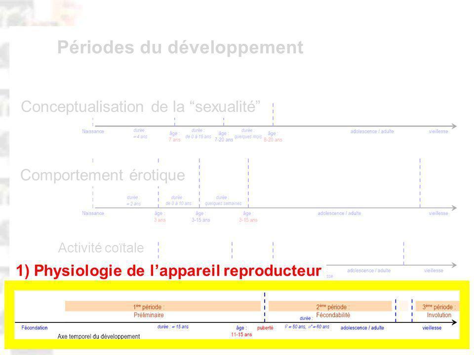 D63 : Modèles : Homme 20 : Développement & Dynamique 2 Comportement érotique Activité coïtale Conceptualisation de la sexualité Périodes du développement 1) Physiologie de lappareil reproducteur