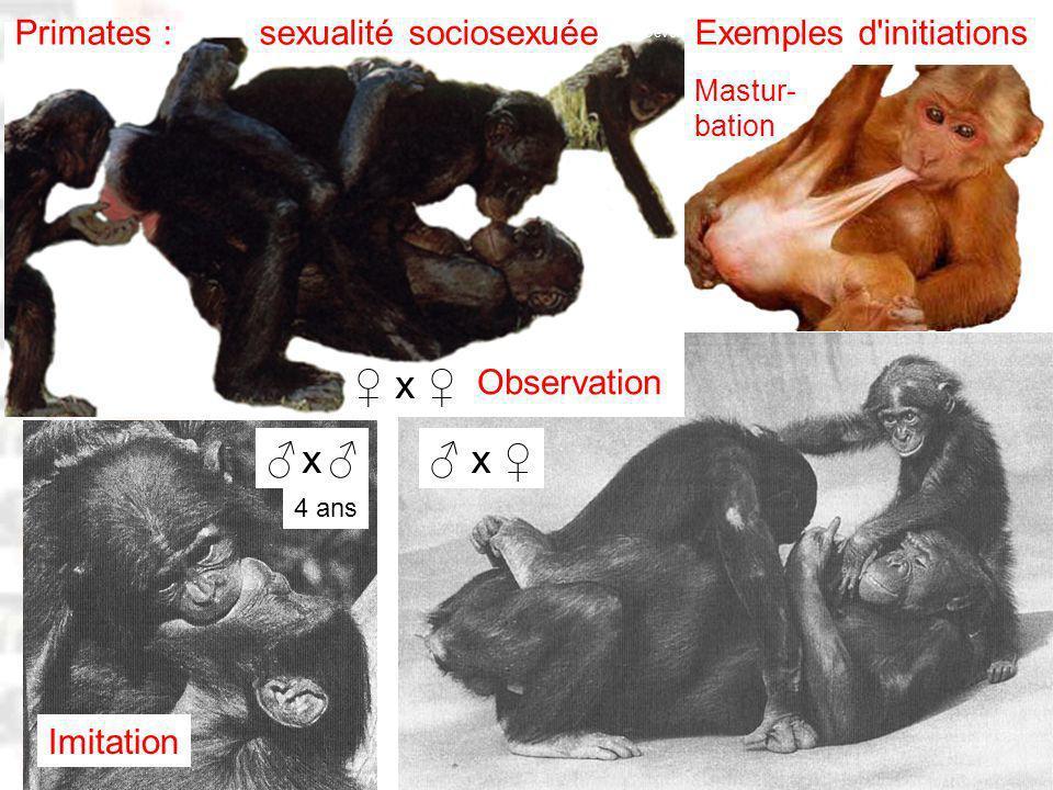 D72 : Modèles : Homme 20 : Développement & Dynamique 8 Exemples d initiations x x Imitation Observation x Primates : sexualité sociosexuée Mastur- bation 4 ans